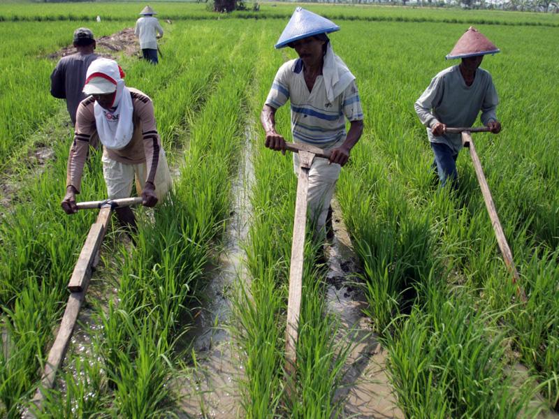Cina Diminta Investasi Sektor Pertanian Berita Moneter Dan Keuangan